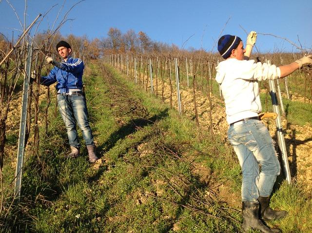 vineyard-1870435_640